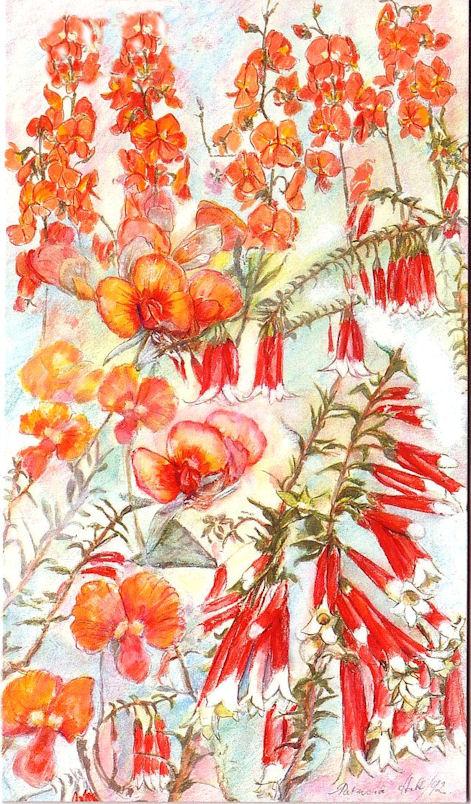 Card Native Fuchsia