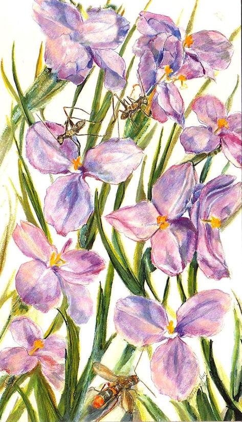 Card Silky Purple Flag