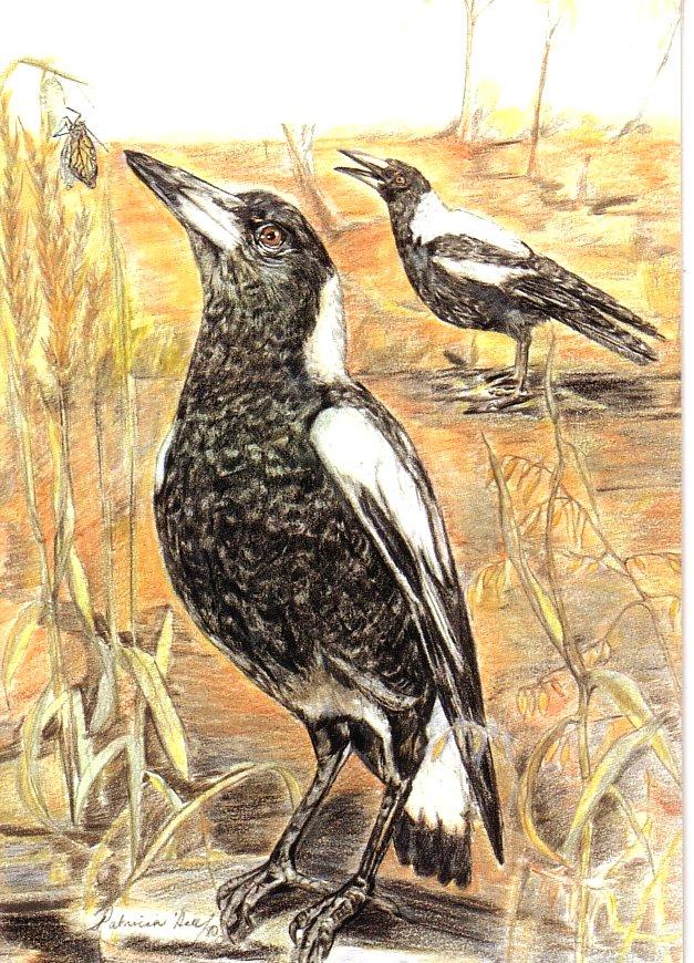 Card Magpies