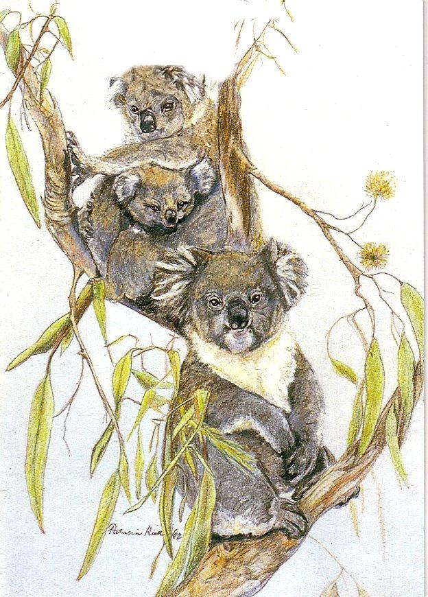 Card Koalas Vertical