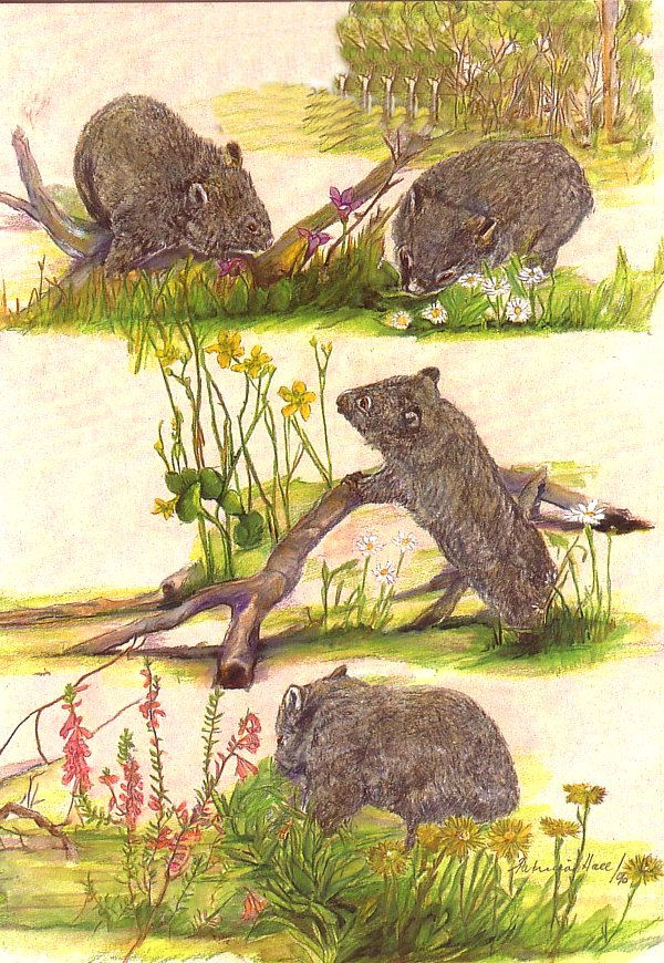 Card Wombats