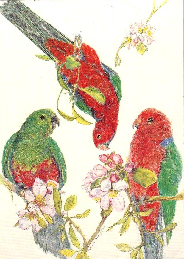 Card Parrots