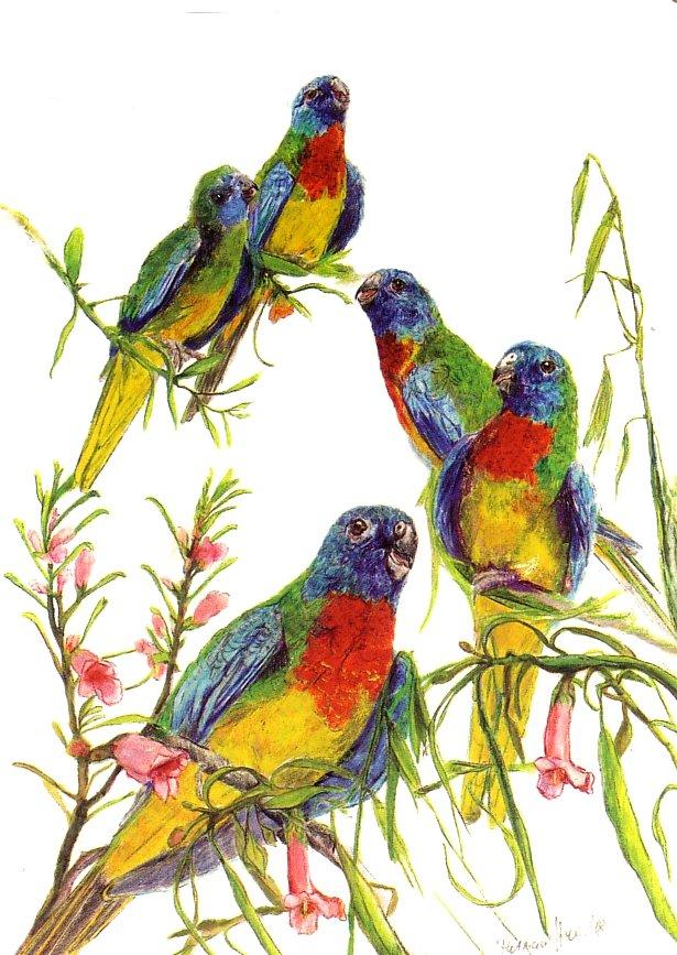 Card Parakeets
