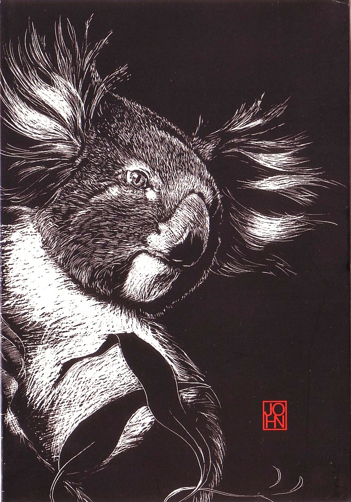 Card B+W Koala