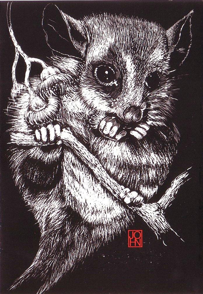 Card B+W Possum