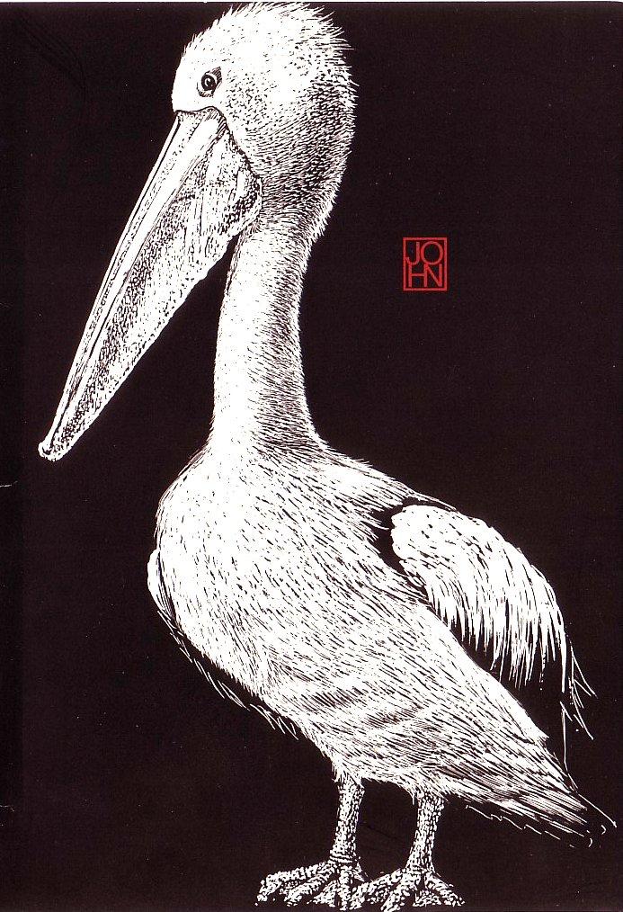 Card B+W Pelican