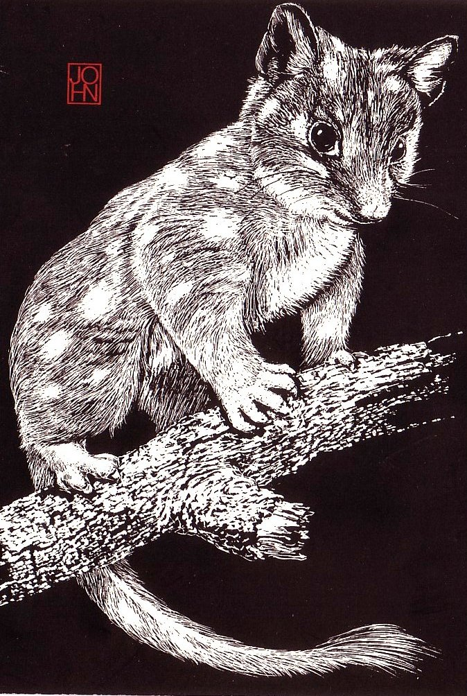 Card B+W Quoll